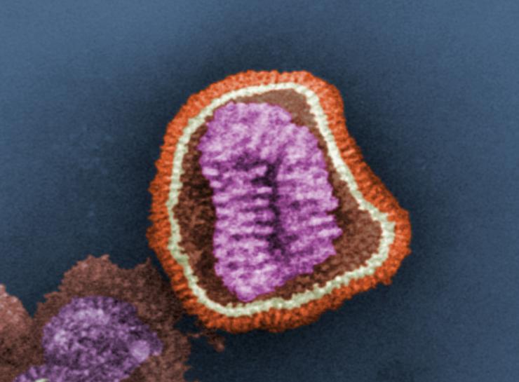 $21.9 Million Gene Modulation Research Effort Targets Influenza Pandemics