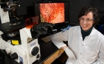 Scientists Work to Engineer an Injectable Therapy for Rotator Cuff Injuries