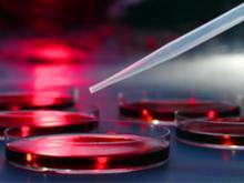 Cellular, Molecular and Biomaterials Engineering